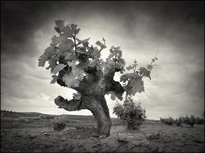 pasion - La Mancha Excellent