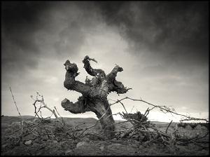 trabajo - La Mancha Excellent