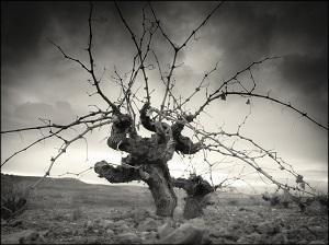 tradición - La Mancha Excellent